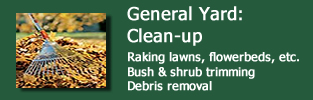 general yard and cleanup